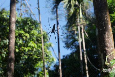 Die größte Spinne, die ich je gesehen habe
