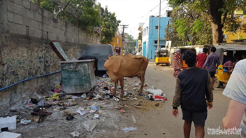 Chennai Muell Indien