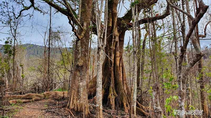 von einem Brand befallenen Gebiet. Große Bäume haben überlebt.