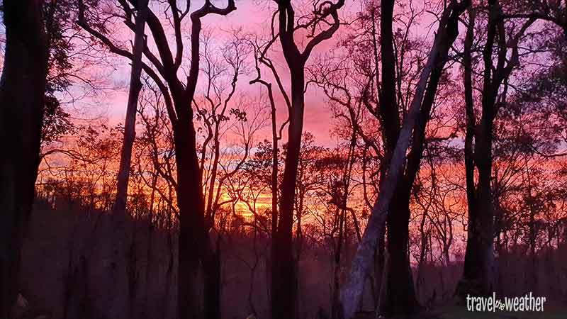 Abenddämmerung zwischen den Bäumen.
