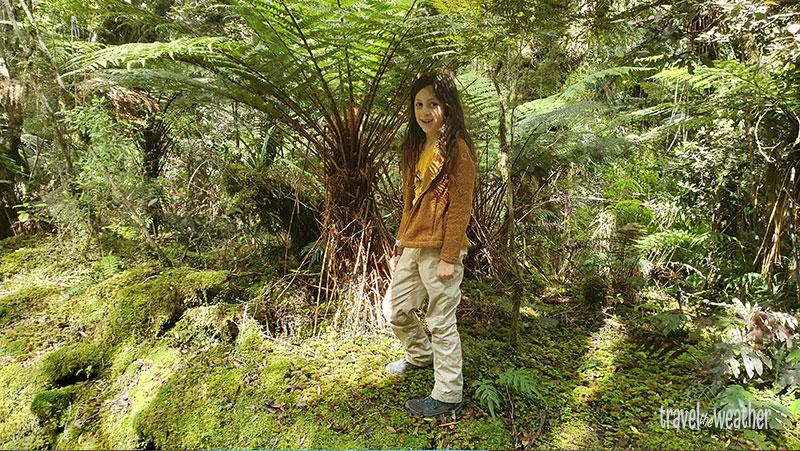 Das ist ein kleiner Baumfarn in Neuseeland