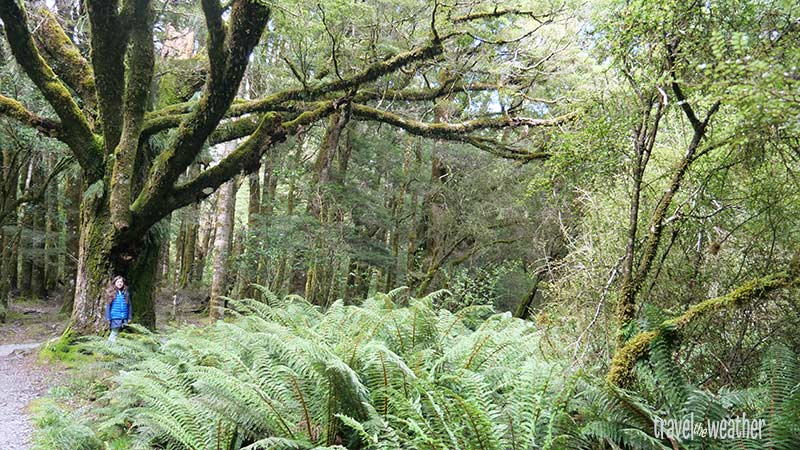 Der gemäßigte Regenwald bietet ein breites Spektrum uns unbekannter Pflanzen.